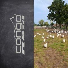 Congo More Natural Chicken Dinner 25lb | 11.34kg