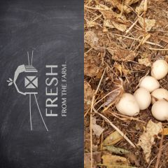 Fresh From the Farm Pastured Duck Eggs 6
